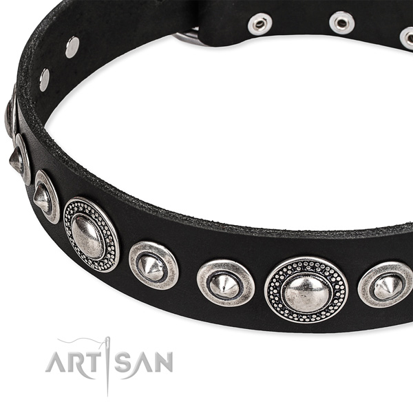 Everyday walking embellished dog collar of finest quality full grain leather
