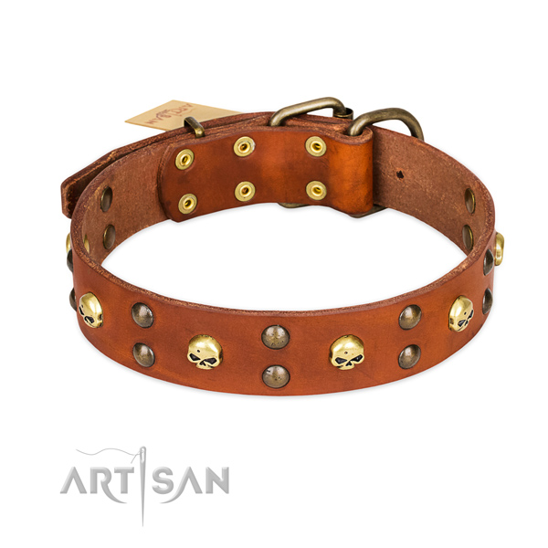 Everyday walking dog collar of reliable full grain natural leather with embellishments