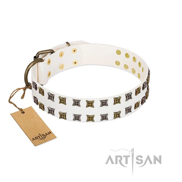 Leather collar with trendy adornments for your dog