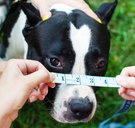 How to Measure Your Dog for Muzzle